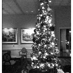 The holiday tree in the lobby