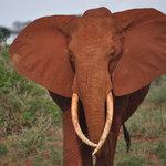 Foto de Safari Kenya Top - Private Day Tours