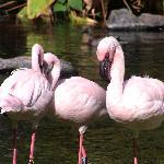 the beautiful birds!!!