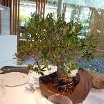 Olives sur arbre