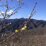 山頂からの景色・蝋梅と周囲の山