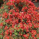 Blachi Koko: Bright flowers