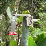 Hummingbird feeders at San Isidro