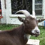 Blake th goat