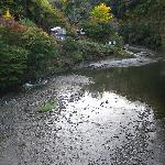 観音橋から見た養老川