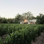 View of vineyards from pool area