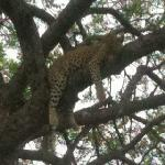 Leopard happy with facilities