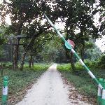 Chapramari Forest -Entry