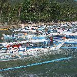 Banka boats