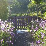 Front garden at Fernview