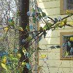 Parakeet House
