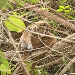 """Animaletto locale presente nel giardino """"jungla""""."""