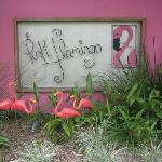 Pink Flamingos at home...