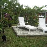 Private back yard with chickens