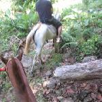 Horses :(