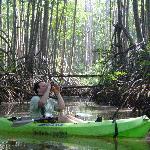 deep in the mangrove jungle