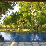 Pool near Banyan 4