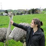 victoria the ostrich