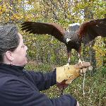 Lorrie with Harris Hawk in the woods