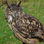 Talons Private Hawk Walk