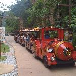 Tractor-train ride. Wish it is using battery instead of diesel though for better environmental