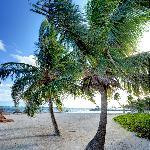 Grand Caribe Palm Trees