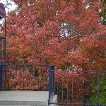 Fall foliage in Eureka
