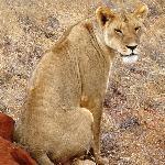 safari: leone