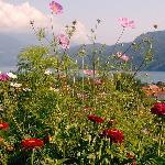 Üppiger Blumengarten