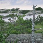 Dunes at Sandy Neck