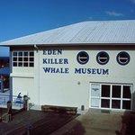Killer Whale Museum Photo