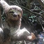 3-toed sloth saying hi!