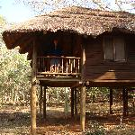 the tree house accomodation