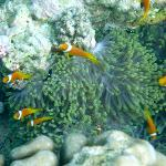 We found Nemo...he's everywhere!