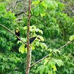 Wild toucans fly through the area on a regular basis; we saw two groups in one day.