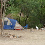 Camping with our wildlife.....Golden.
