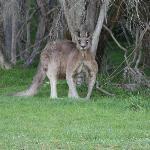 Our local Australian wildlife.