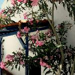 blossoms and blue doors