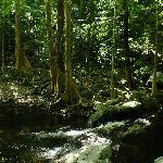 Stoney Creek 1/2 hour from Studio walking