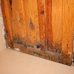 Der var skimmelsvamp på dørene og andre steder