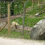 Mercedes Polar Bear