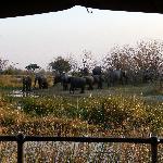 Family gathering - elephant style.