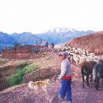 Rush hour in the Sacred Valley