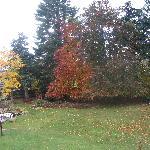 View from Benson bedroom window