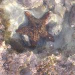 Starfish in the reef on beach
