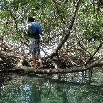 Explorando los manglares
