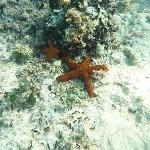 Star fishes (snorkeling)