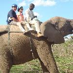 elephant back