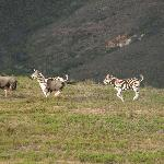 wild animals in the reserve