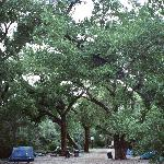 I slept under the stars/cottonwoods on the picnic table.